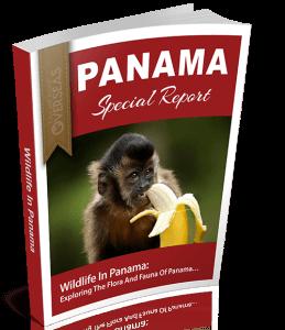 Wildlife In Panama | Panama Special Report