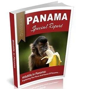 Wildlife In Panama
