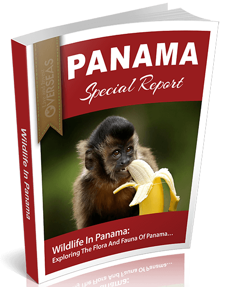 Wildlife In Panama | Panama Special Report